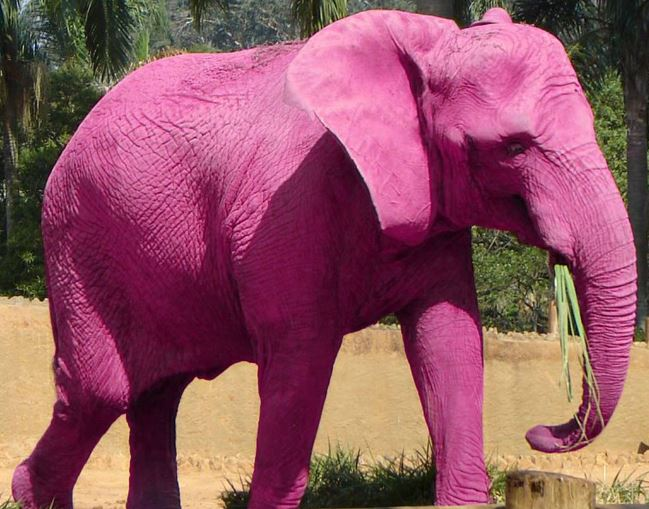 Pink Elephant - A sign that today is the best day of your life